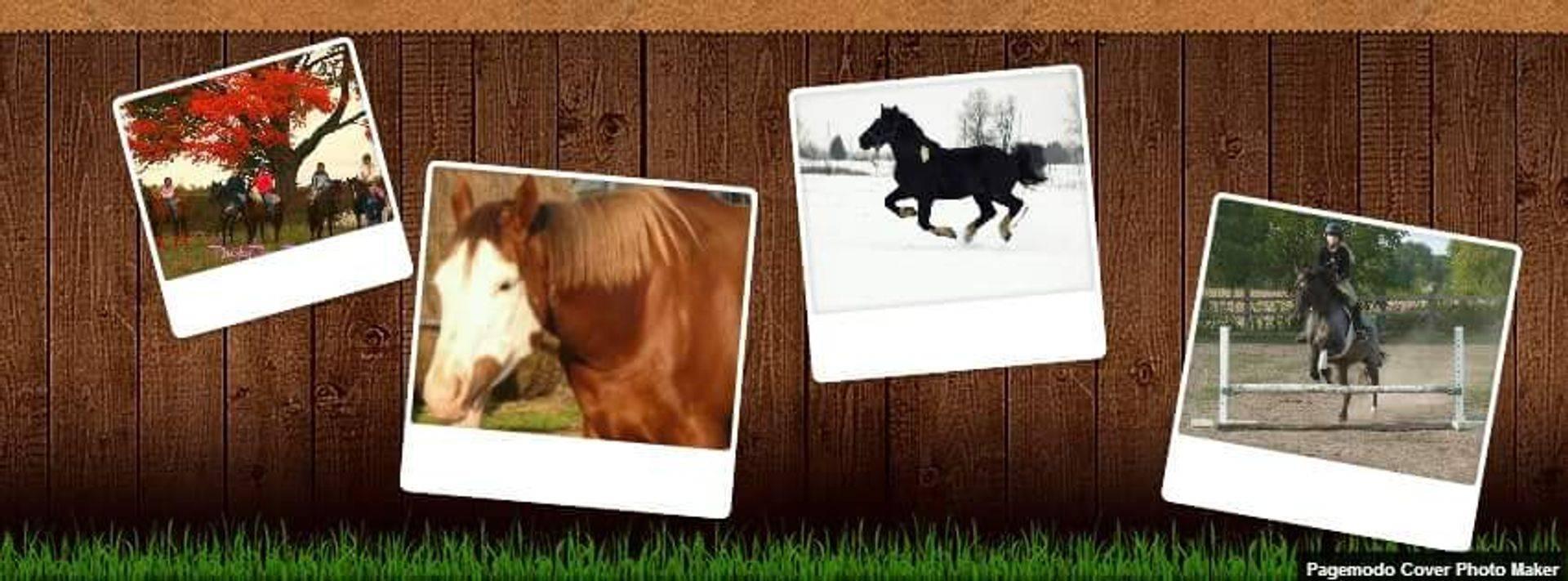 Behind The Bit Equestrian Center Price List