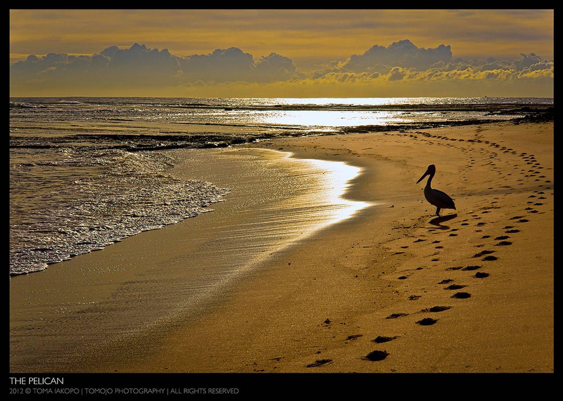 Sun Rise Therapy