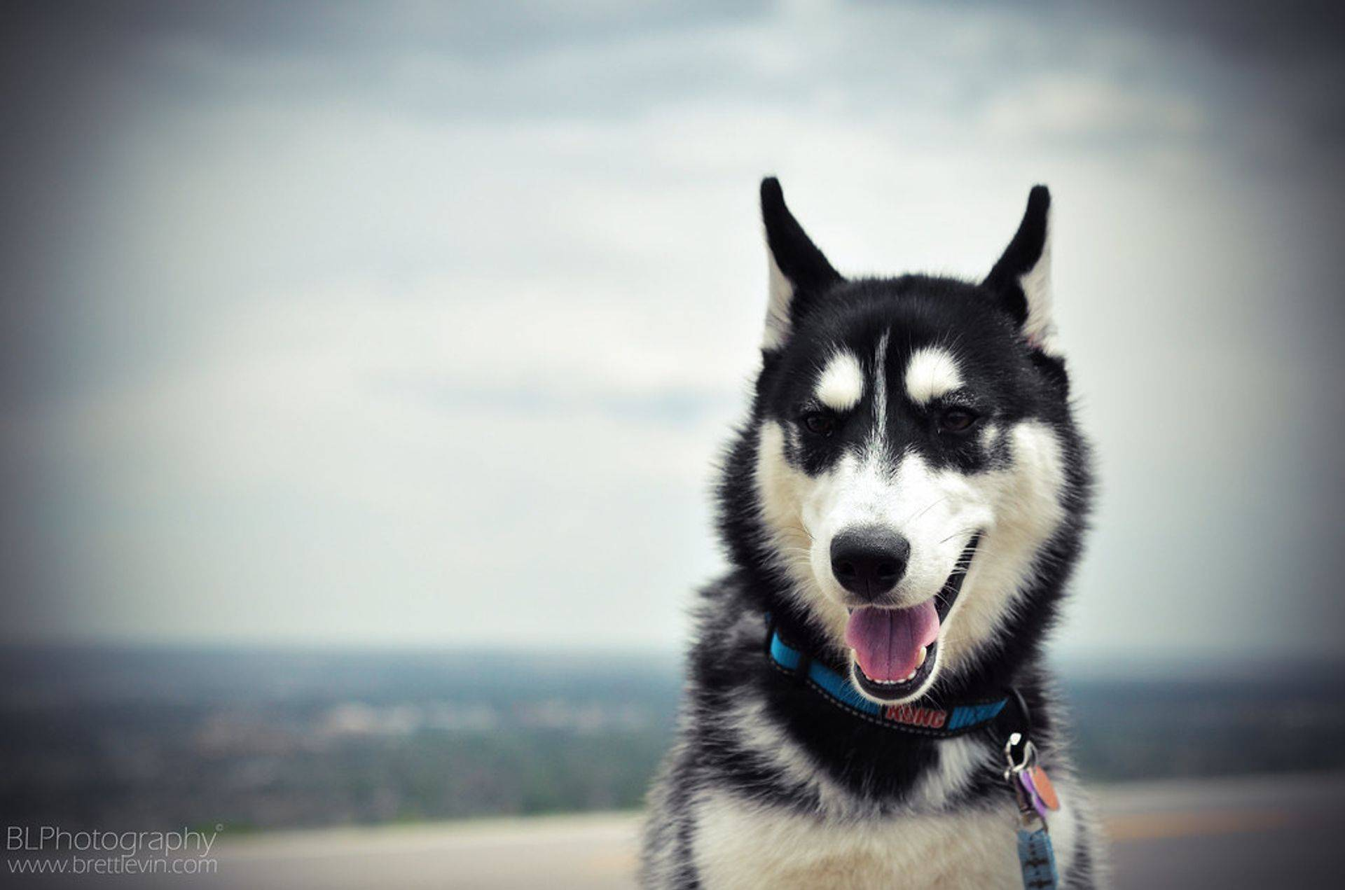 Luna Dog Adoption Colorado