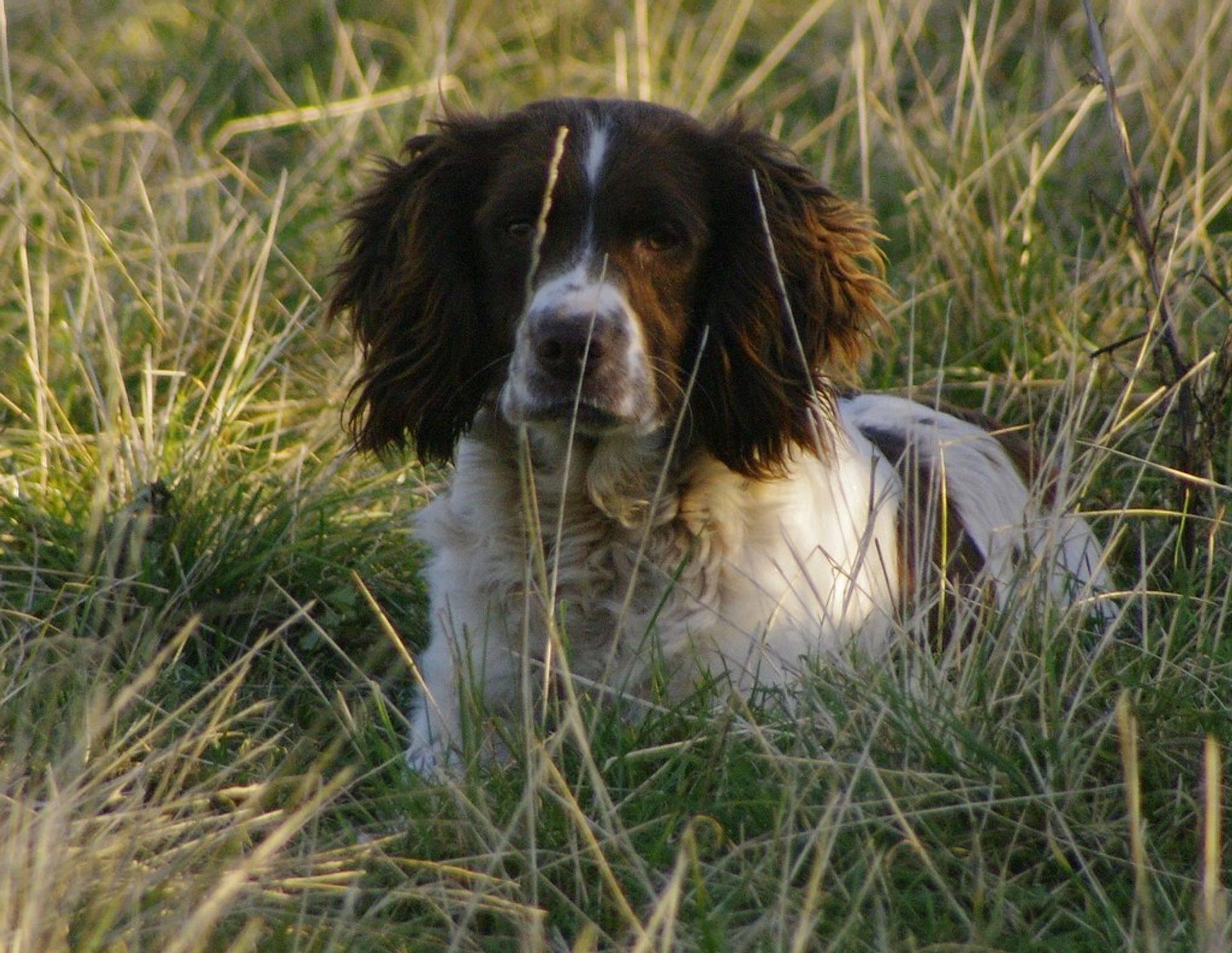 Dog Training Nr Callington East Cornwall
