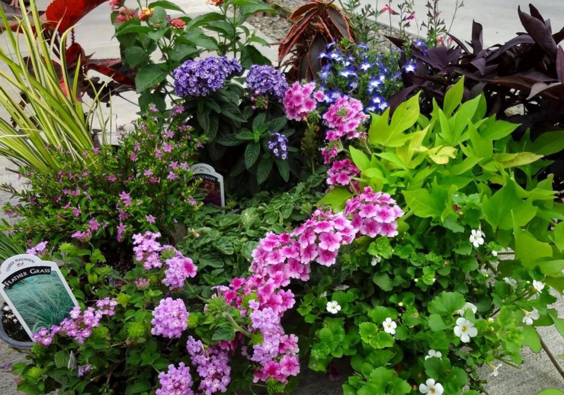 Miscellaneous Summer Perennials