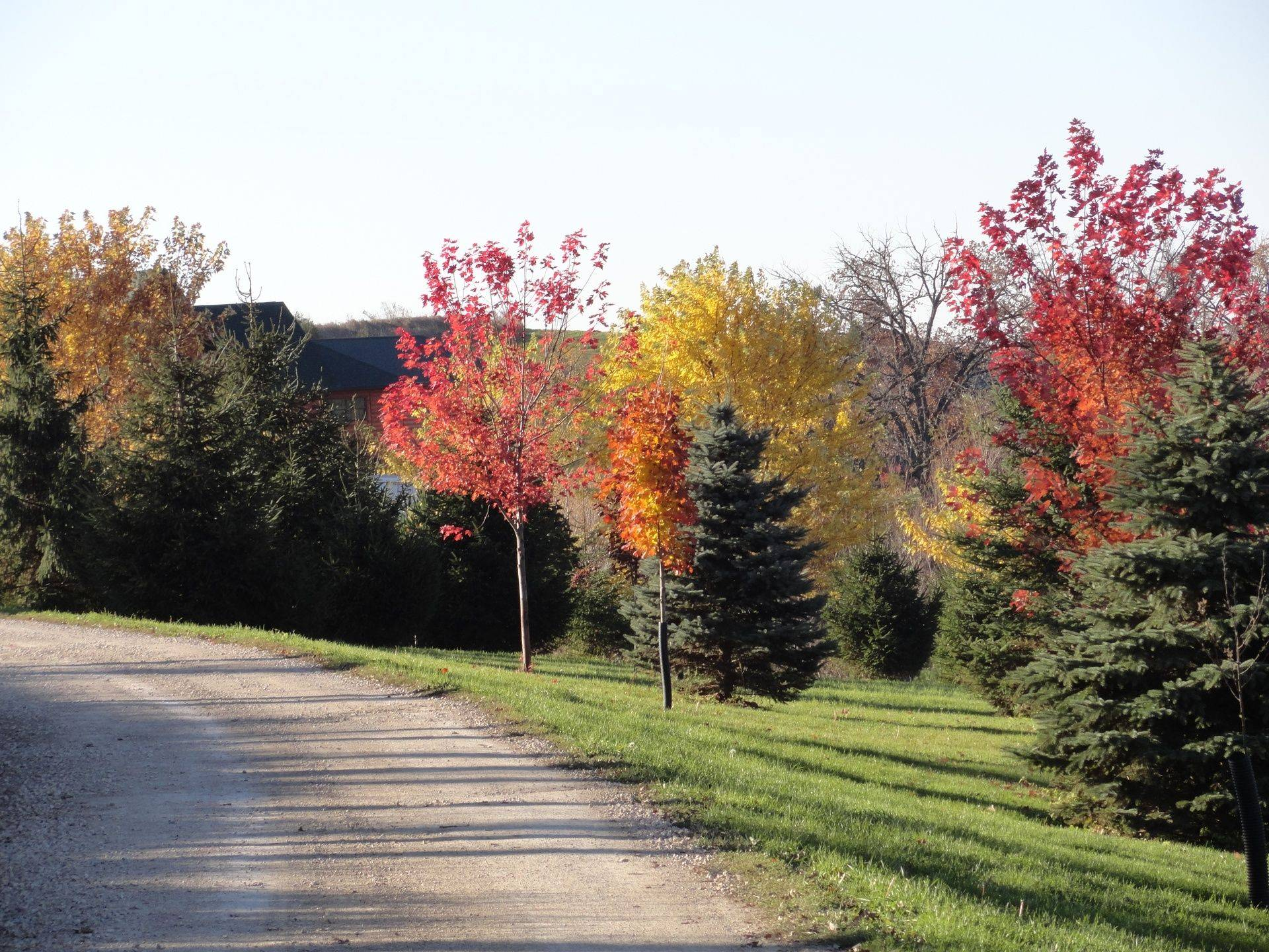 Driveway in the Fall at Serenity Valley B & B