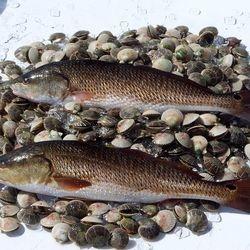 Redfish And Scallops For Dinner.Fot Dinner.