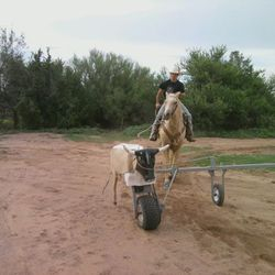 Buford is a great training tool for all horses.