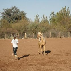 Many problems a horse might have, shows up in ground work.