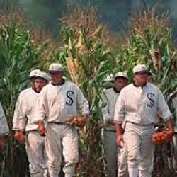 Ghost Players at the Field of Dreams, Dyersville, IA
