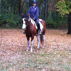 Leeroy 17 YO Kentucky mountain horse. Great on trails. Lots of personality.