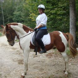 Tucker 12 YO gelding Spotted Saddle horse. Loves trails.
