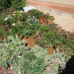 Natural xeriscape plants and landscape fill the Garden with natural beauty