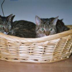My cats Amiboshi and Suboshi.