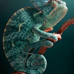 Pgh reptile show