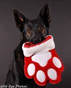GSD holding Stocking