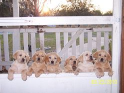 Our first litter in 2010