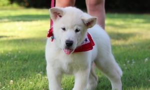past puppy from Onya/Thor