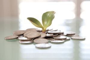 money on a plate surrounded by a money plant
