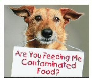 Is the dog food you are feeding killing your pet?