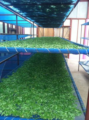 Totally natural drying of our herbs