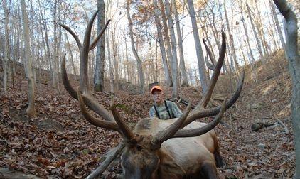 Bull Elk wild boar russian hogs rams
