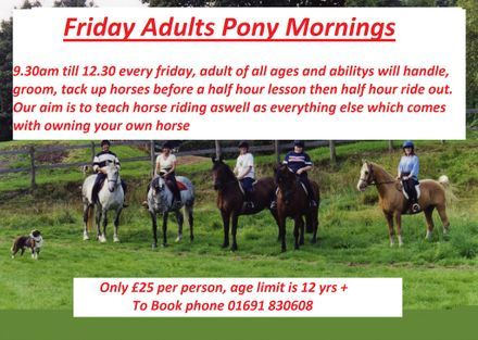 Friday adults pony morning